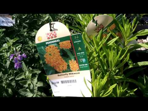 Earl May Garden Center Ames Ia Native milkweed 4 sale YouTube