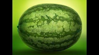 WSZYSTKO o uprawie - Arbuz, Kawon - uprawa warzyw | infoUprawa