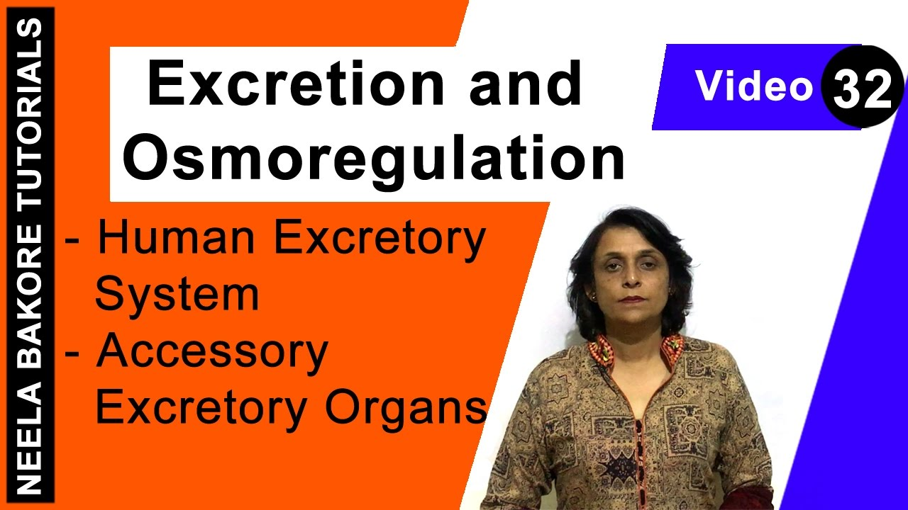 patterns of osmoregulation in different environments Watch osmoregulation in different environment by punjab group of colleges on dailymotion here.