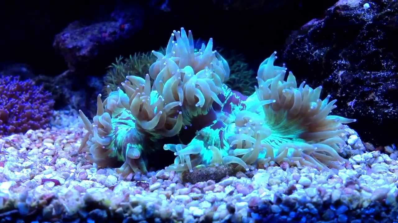 Elegance Coral Hd Time Lapse Video Youtube
