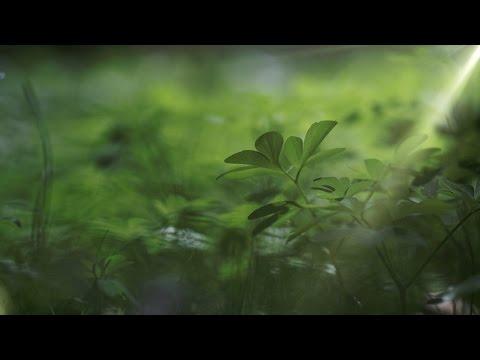 Sustainable II Anthropocene (4k / UHD Master 2014)