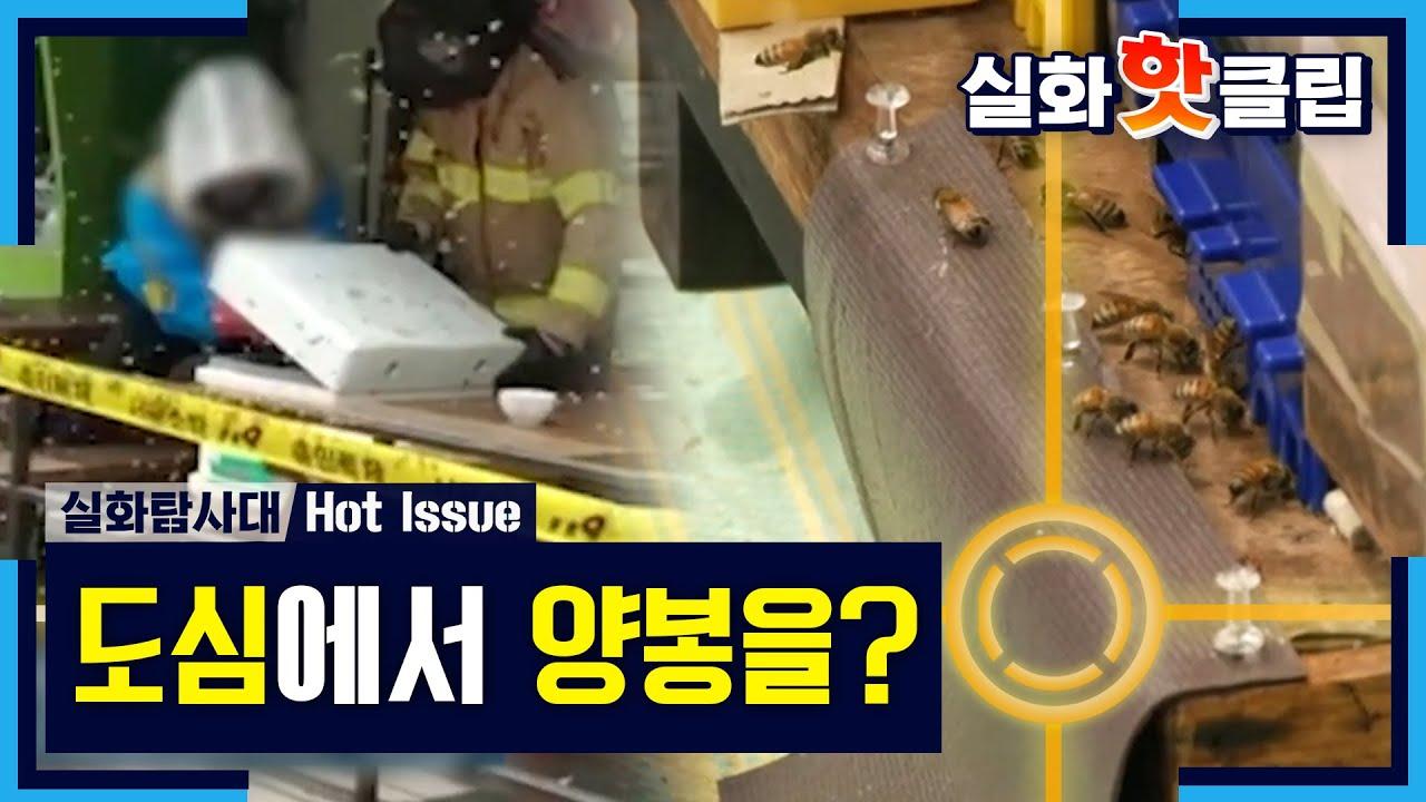 [실화탐사대] 도심에서 양봉을 하는 남자, 벌에 쏘인 주민 , MBC 210619 방송