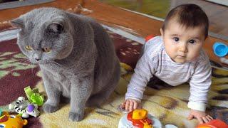 British Shorthair Cat vs Baby