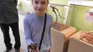 Выставка пауков, ручной паук птицеед