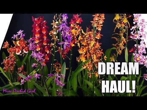 Dream Orchid Haul!