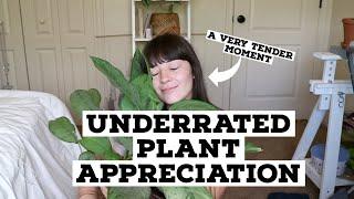 My Favorite Underrated Plants | My Favorite Plants