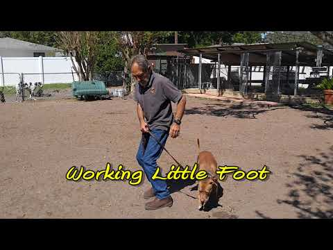 Teaching Your Dog Total Control 2018