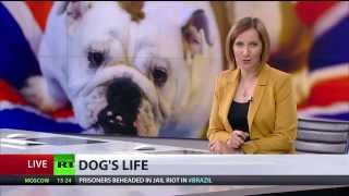 Dogs' Life: Uk's 4mn Four-legs-and-fat Farce