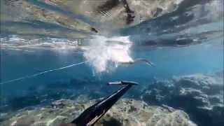 Zıpkınla Balık Avı Sığ Su