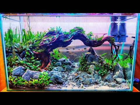 #91-wonderful-selena-catfish-aquascape-theme