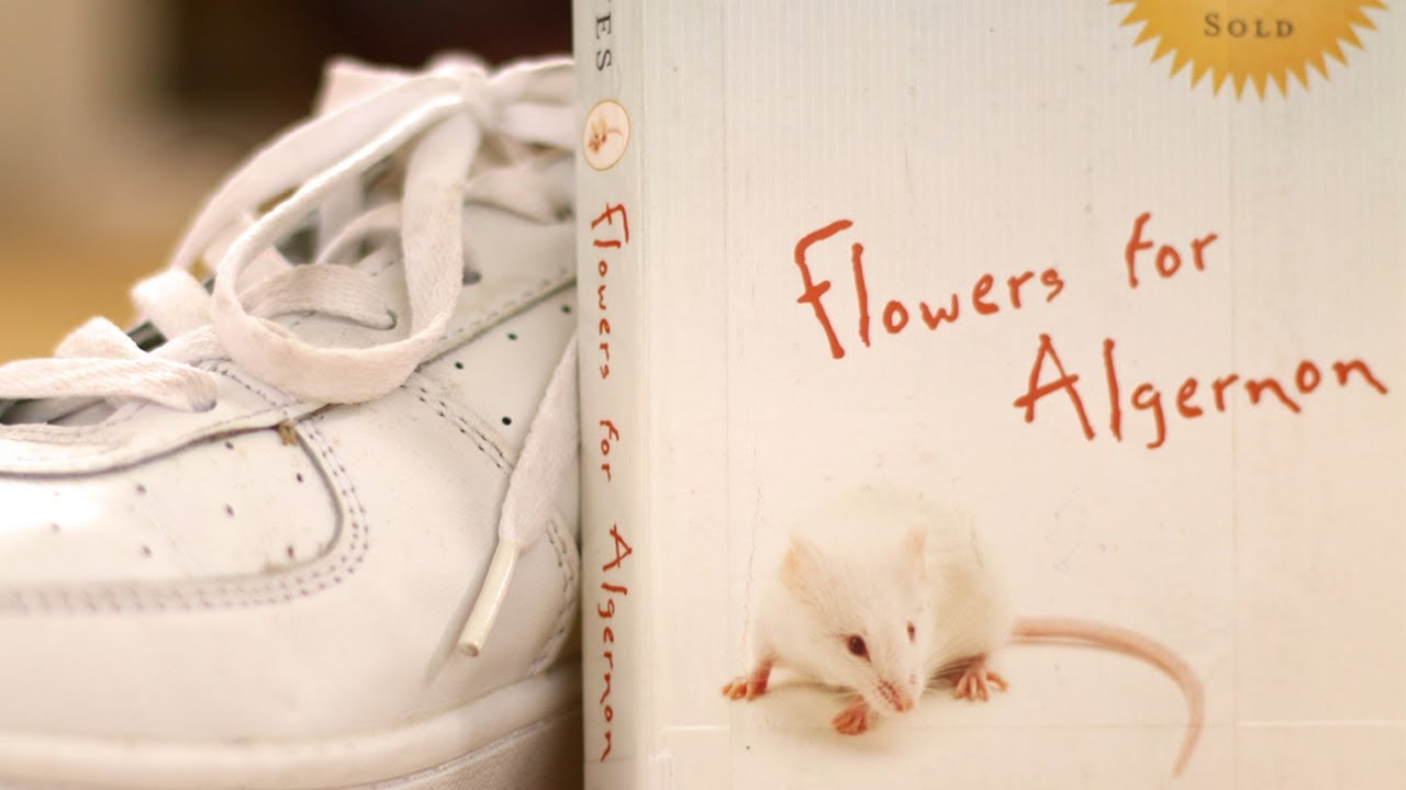 flowers for algernon by daniel keyes book summary and review  flowers for algernon by daniel keyes book summary and review minute book report