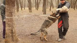 Дрессировка собак в Ростове-на-Дону