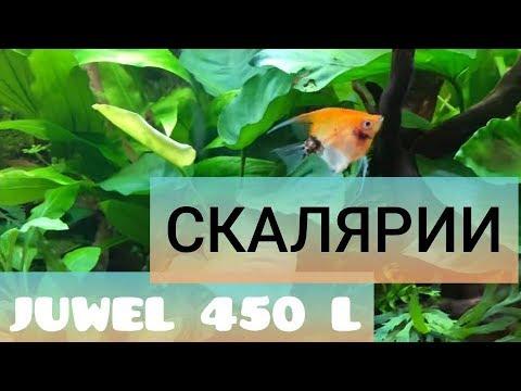 Запускаем рыбок в растительный аквариум Juwel 450 литров. Часть 27