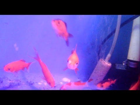 Digging Out The Ol' FishCam For Our New Goldfish