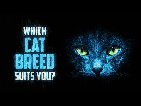 Which Cat Breed Suits You?