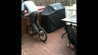 German Shepherd wanting a part of pauly d's bike