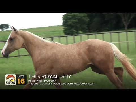 LOTE 16 - THIS ROYAL GUY