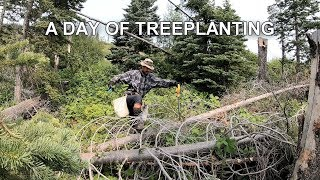 A day of Treeplanting and 2 days of bikepacking in the Canadian forests