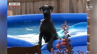 """Usa fa il bagno in piscina ma viene scoperto il cane """"chiede scusa"""""""