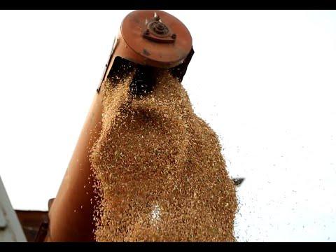 ХХААХҮЯ: X/11-ний байдлаар ургац хураалт 50 хувь, төмс хүнсний ногооных 75 хувьтай байна