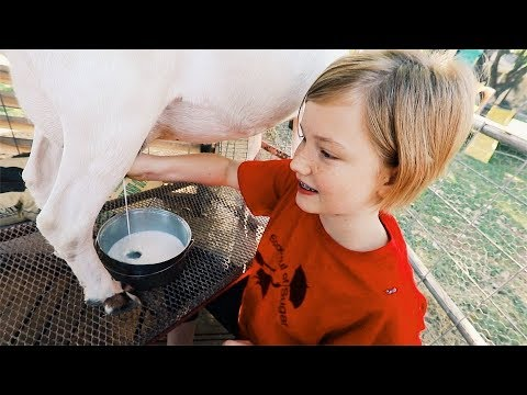 Fresh GOAT Milk on ONE ACRE of land