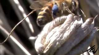 Honey Bees and Pollinators 2014