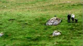 Oakshot Gundogs Training In Scotland Ftch Shadowbrae Druid Of Oakshot Blind Retrieves