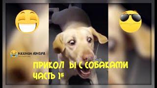 Приколы с собаками 2020 Часть 1# Прикол Ржака Юмор До слёз!!!!