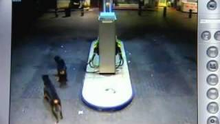 Impactante video de ataque de tres perros Rottweiler a dos personas en Alicante thumbnail