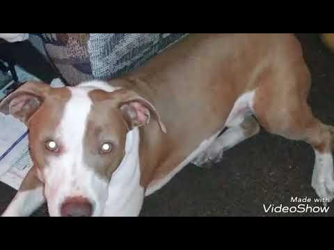 Whitney wisconsin dog video