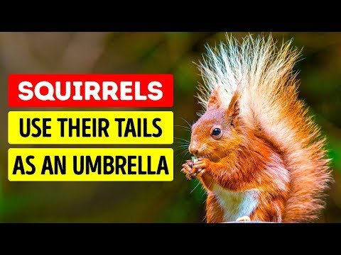 50 Cute Animal Facts That Will Melt Your Heart