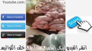 Download Video شاهد تسمين الدجاج بالحقن قبل عرضها في السوبر ماركت MP3 3GP MP4
