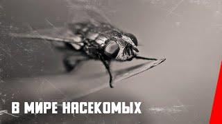 В мире насекомых (1936) документальный фильм