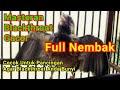 Masteran Blackthroat Gacor Nembak  Mp3 - Mp4 Download