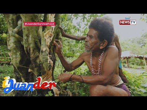 IJuander: Paano Nakaligtas Ang Mga Katutubong Aeta Sa Pagsabog Ng Mt. Pinatubo?