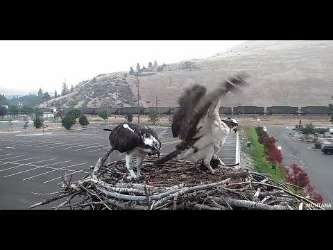 Iris and Louis drop by Hellgate nest 2017 08 23 09 27 42 771