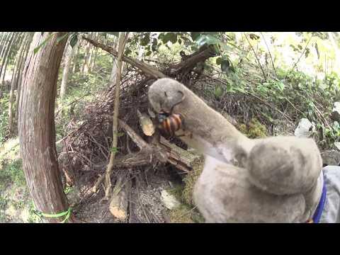 On Smithsonian 'Killer Hornet' Shoot Creating The Epic Battle Scene #OpenMedia