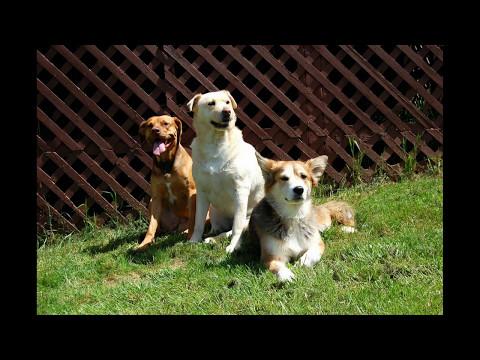 Rescue Dog (Original Song)~Gene Burnett