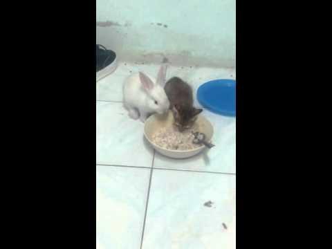 น่ารักมากกระต่ายแคระกินข้าวกับน้องแมว