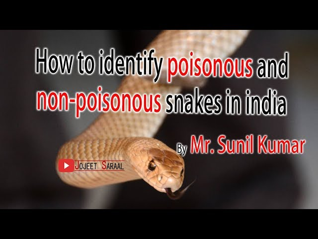 How to identify poisonous and non poisonous snakes in india
