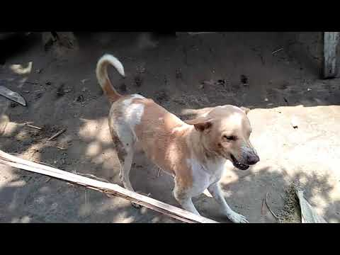 Dog torcher