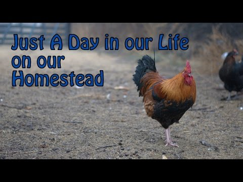 a day in our life