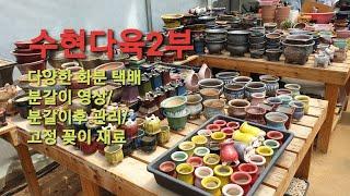 수현다육2부/여러종류화분 택배/분갈이꿀팁 영상/지지대꽂…