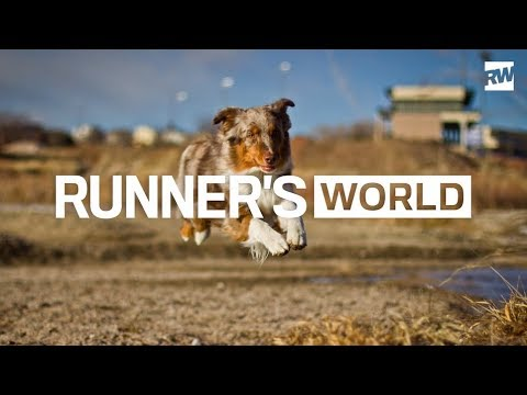 The 6 Best Types of Dogs for Runners
