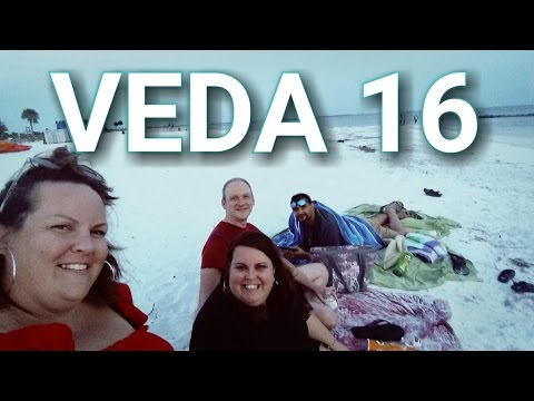 DOLPHIN SIGHTINGS and ATTACK OF THE SEAGULLS! veda 16