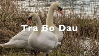 TONGDAUR Bo/îtes /à Musique Bo/îte /à Musique en Bois Le Gore Bo/îte /à Musique Bo/îte /à Musique Color : Noyer, Size : Amazing Grace
