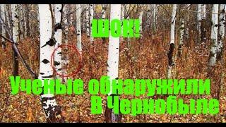 То, что ученые обнаружили в чернобыльском лесу, шокировало весь мир!!!(То, что ученые обнаружили в чернобыльском лесу, шокировало весь мир! Почему то, что ученые обнаружили в черн..., 2015-10-19T15:31:45.000Z)