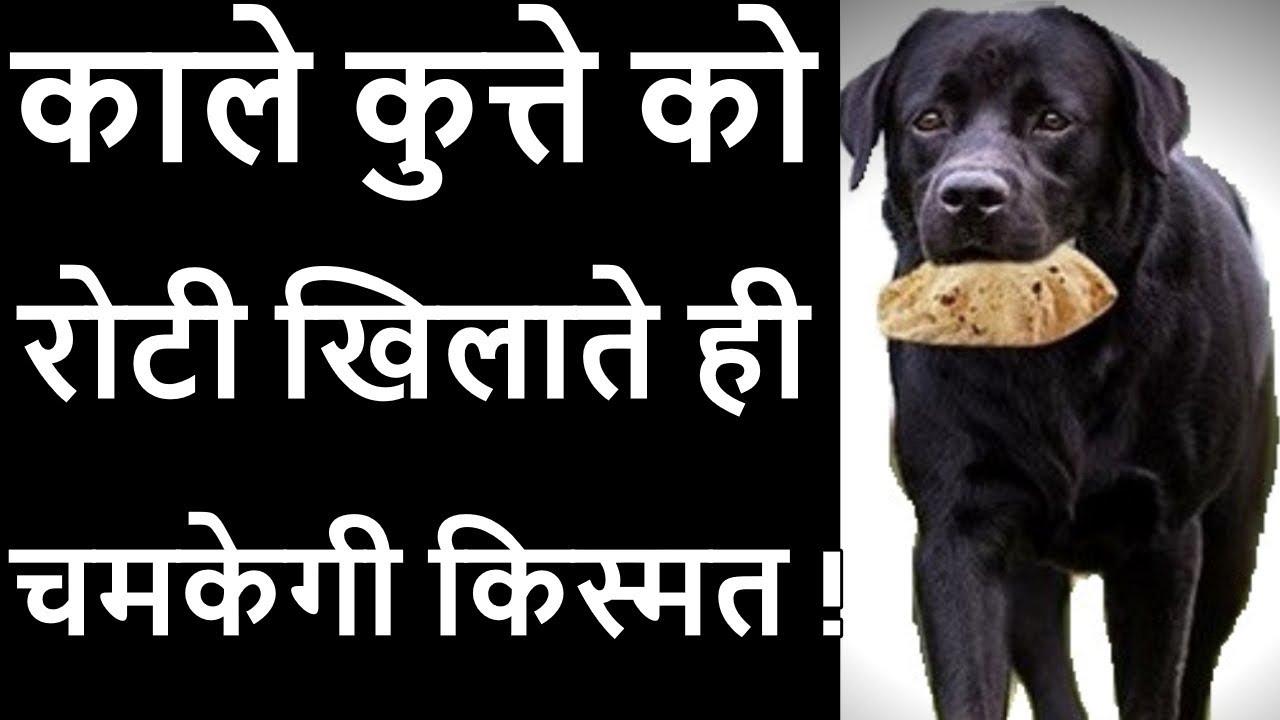 काले रंग के कुत्ते को रोटी खिलाने से मिलता है ऐसे कष्टों से छुटकारा