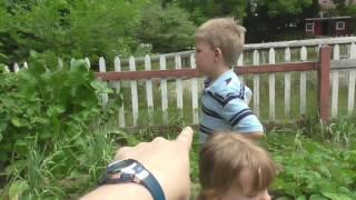 June 27, 2016 Zone 5 Upstate New York Vegetable Garden Update *detailed*