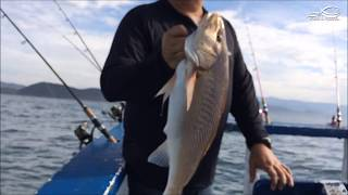 Pescaria em Alto Mar Corvina e Peixe Galo - Perequê, Guarujá - SP